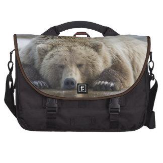 USA, Alaska, Katmai National Park, Brown Bear 4 Bags For Laptop
