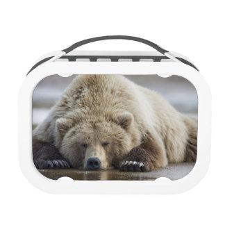 USA, Alaska, Katmai National Park, Brown Bear 4 Yubo Lunchbox