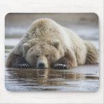 USA, Alaska, Katmai National Park, Brown Bear 4 Mouse Pad