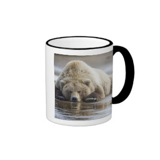 USA, Alaska, Katmai National Park, Brown Bear 4 Ringer Coffee Mug