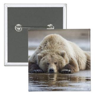 USA, Alaska, Katmai National Park, Brown Bear 4 Pinback Button
