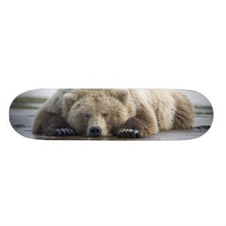 USA, Alaska, Katmai National Park, Brown Bear 4 Skateboard Deck
