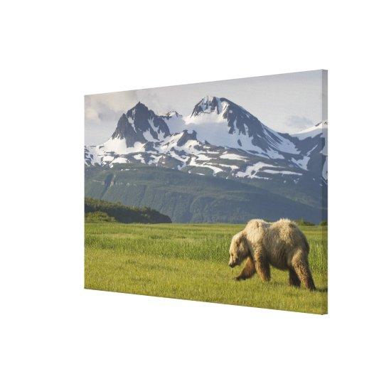 USA, Alaska, Katmai National Park, Brown Bear 5 Canvas Print
