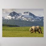 USA, Alaska, Katmai National Park, Brown Bear 5 Posters