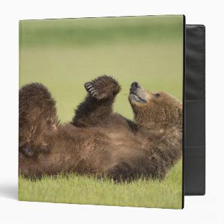 USA, Alaska, Katmai National Park, Brown Bear 6 Binder