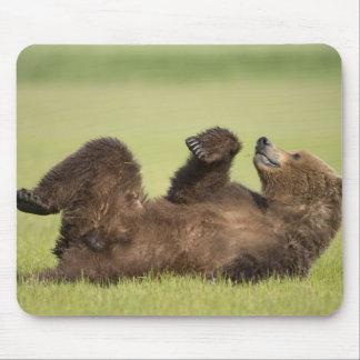 USA, Alaska, Katmai National Park, Brown Bear 6 Mouse Pad