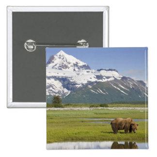 USA, Alaska, Katmai National Park, Brown Bear Pinback Button