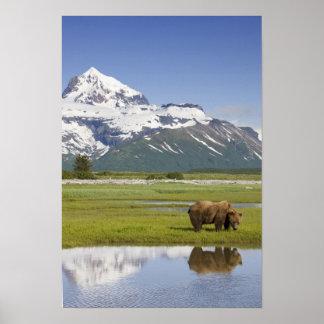 USA, Alaska, Katmai National Park, Brown Bear Poster
