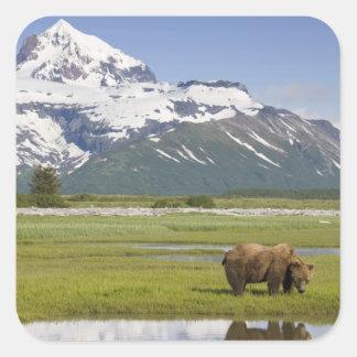 USA, Alaska, Katmai National Park, Brown Bear Square Sticker