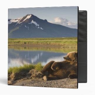 USA, Alaska, Katmai National Park, Brown Bears 2 Binder