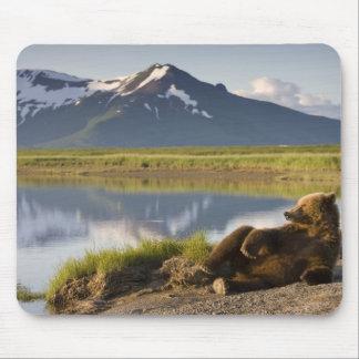 USA, Alaska, Katmai National Park, Brown Bears 2 Mouse Pad