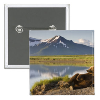 USA, Alaska, Katmai National Park, Brown Bears 2 Pinback Button