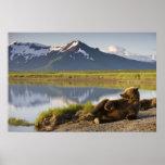 USA, Alaska, Katmai National Park, Brown Bears 2 Poster