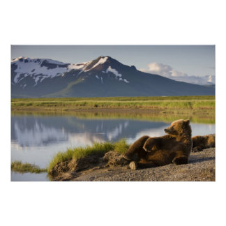 USA, Alaska, Katmai National Park, Brown Bears 2 Poster