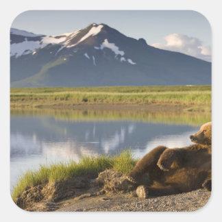 USA, Alaska, Katmai National Park, Brown Bears 2 Square Sticker