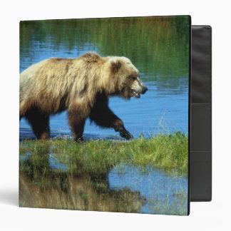 USA, Alaska, Katmai National Park, Grizzly 2 3 Ring Binder