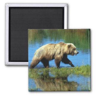USA, Alaska, Katmai National Park, Grizzly 2 Refrigerator Magnet