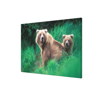 USA, Alaska, Katmai National Park, Grizzly 3 Canvas Print