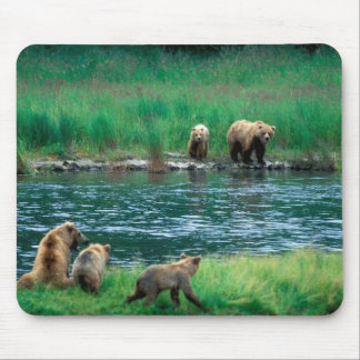 USA, Alaska, Katmai National Park, Grizzly 4 Mouse Pad