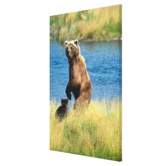 USA, Alaska, Katmai National Park, Grizzly 5 Canvas Print