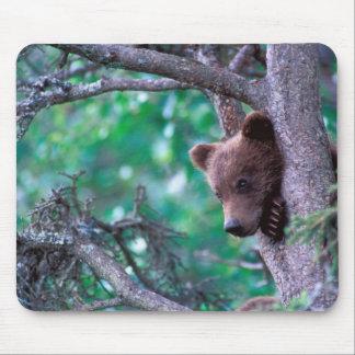 USA, Alaska, Katmai NP, Grizzly Bear cub Mouse Pad