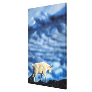 USA, Alaska, Kenai Fjords National Park, Canvas Print