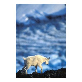 USA, Alaska, Kenai Fjords National Park, Photo Print