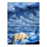 USA, Alaska, Kenai Fjords National Park, Postcard