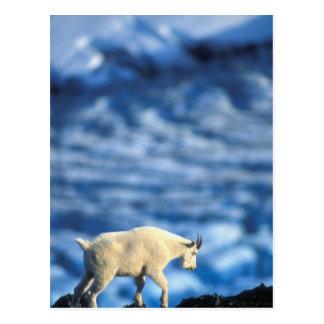 USA, Alaska, Kenai Fjords National Park, Post Card
