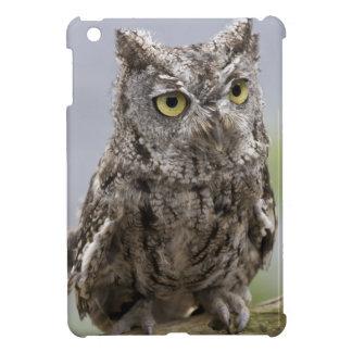 USA, Alaska, Ketchikan. Front close-up of iPad Mini Cases