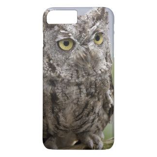 USA, Alaska, Ketchikan. Front close-up of iPhone 8 Plus/7 Plus Case