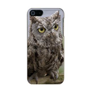 USA, Alaska, Ketchikan. Front close-up of Metallic Phone Case For iPhone SE/5/5s