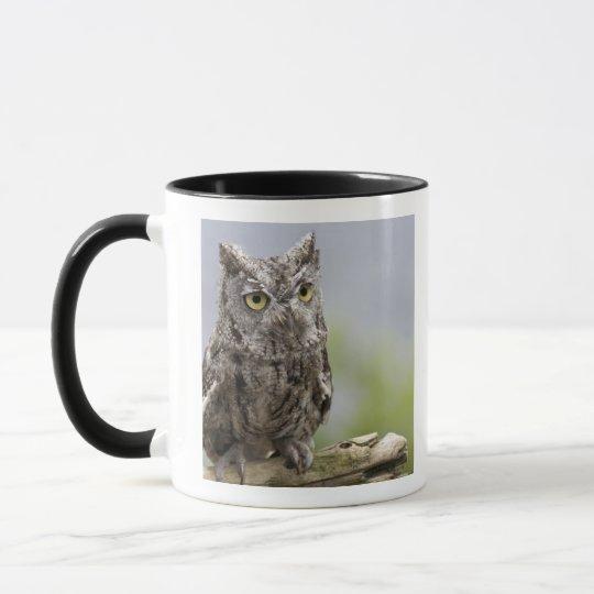 USA, Alaska, Ketchikan. Front close-up of Mug