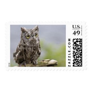 USA, Alaska, Ketchikan. Front close-up of Postage Stamp