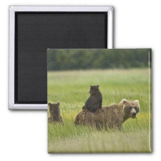 USA, Alaska, Lake Clark National Park. A 2 Inch Square Magnet