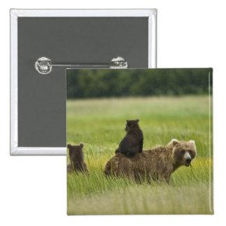 USA, Alaska, Lake Clark National Park. A Button