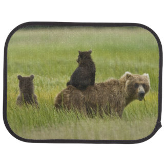 USA, Alaska, Lake Clark National Park. A Car Mat