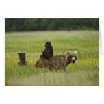USA, Alaska, Lake Clark National Park. A Cards