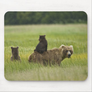 USA, Alaska, Lake Clark National Park. A Mouse Pad