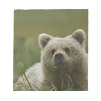 USA, Alaska, Lake Clark National Park. A Note Pad
