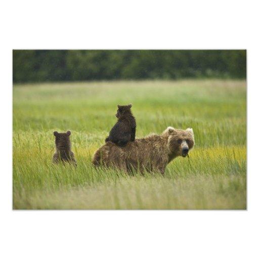 USA, Alaska, Lake Clark National Park. A Photo Print