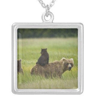 USA, Alaska, Lake Clark National Park. A Silver Plated Necklace