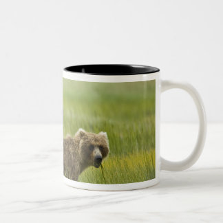USA, Alaska, Lake Clark National Park. A Two-Tone Coffee Mug