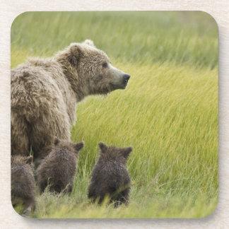 USA, Alaska, Lake Clark National Park. Grizzly Beverage Coaster