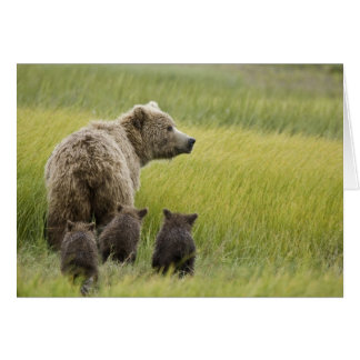 USA, Alaska, Lake Clark National Park. Grizzly Card