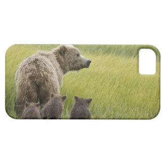 USA, Alaska, Lake Clark National Park. Grizzly iPhone SE/5/5s Case