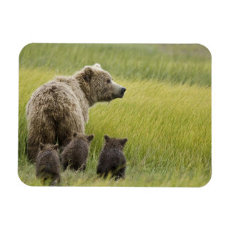 USA, Alaska, Lake Clark National Park. Grizzly Magnet