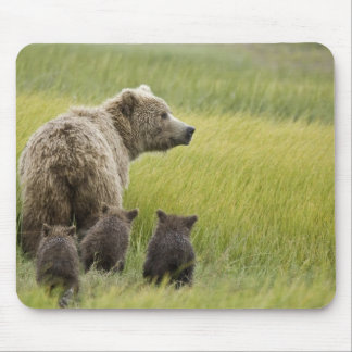 USA, Alaska, Lake Clark National Park. Grizzly Mouse Pad