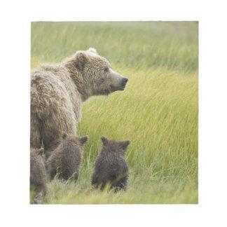 USA, Alaska, Lake Clark National Park. Grizzly Memo Note Pads