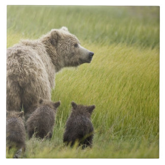 USA, Alaska, Lake Clark National Park. Grizzly Tile